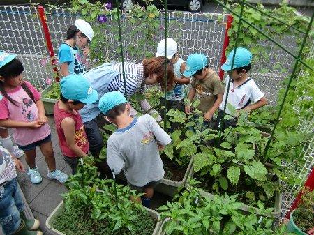 野菜作り農園
